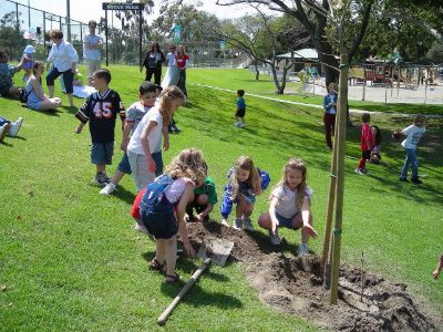"Planting Our ""Midwife Tree"""
