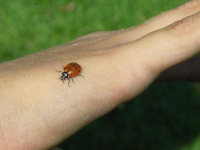 "One Little ""Lady"" Bug"